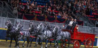 Travis Shaw drove the hitch of Ames Percheron Farm to the win in the $25,000 Royal Six-Horse Championship on Saturday night at the Royal Horse Show.