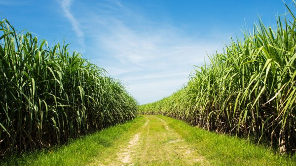 Drone use permission to Indian Institute of Sugarcane Research for field trials